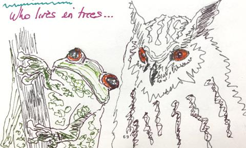 A sketch of a frog and owl
