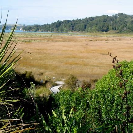 Nukuhou Salt Marsh Lookout.  Photo: Amber Aramoana