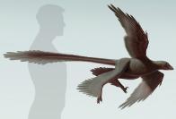 Changyraptor Yang