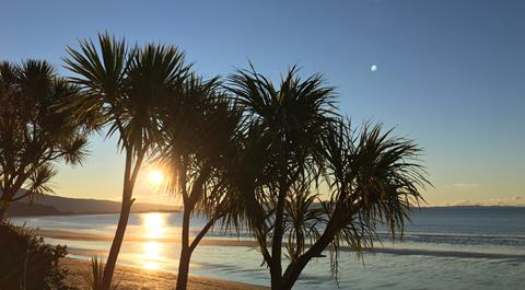 NZ cabbage tree beside the sea