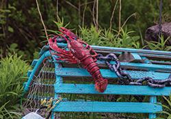 Atlantic Canada trip report - ODX Cross-Canada Tour