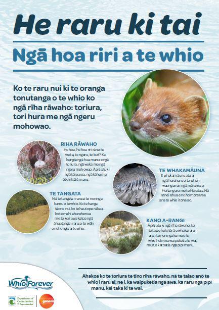 Whio under threat poster | He raru ki tai