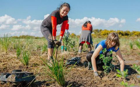 Volunteers planting.