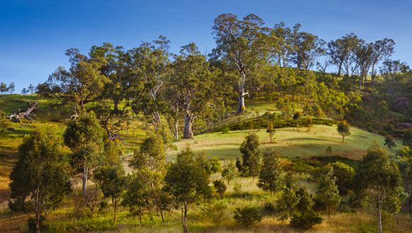 Scenic image of hills with trees