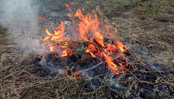 Pile of stick burning