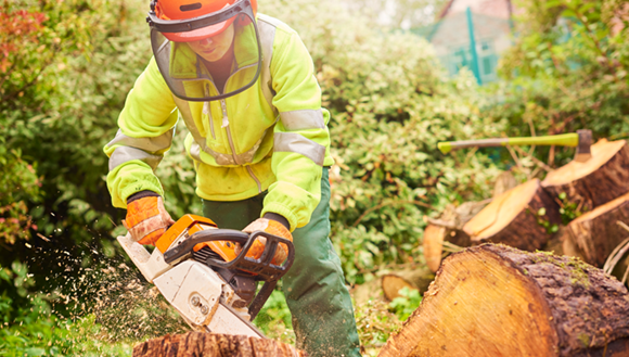 Women using a chainsaw