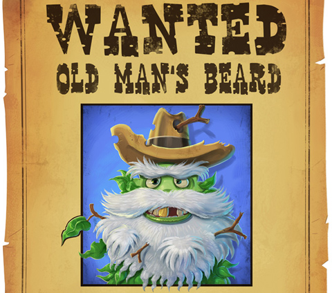 Wanted: Old man's beard
