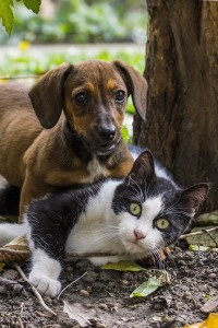 Dog and cat laws