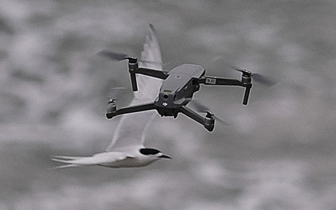 Drone and birds.