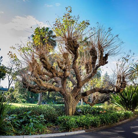 Extraordinary Trees Walk