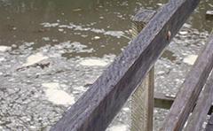 Flood waters under a bridge