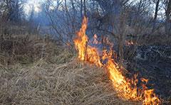 Fire in bushland