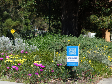Image: A waterwise verge garden in suburban Perth