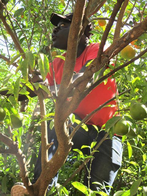 Boubacar Goudiaby cueille