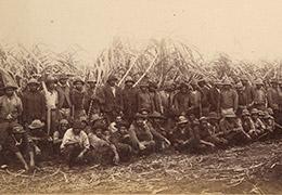 Plantation Voices