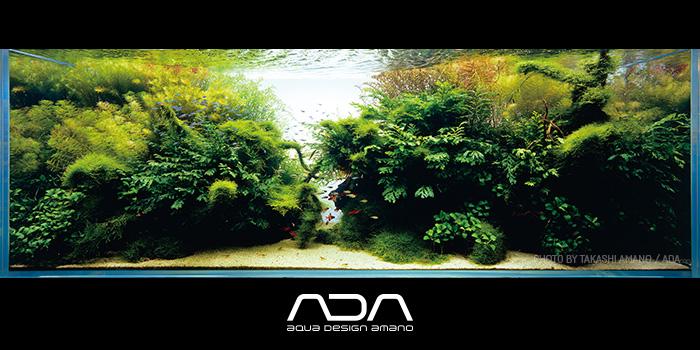 Egyedülálló prémium minőség az akvarisztikában - Aqua Design Amano