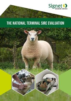 The National Terminal Sire Evaluation leaflet