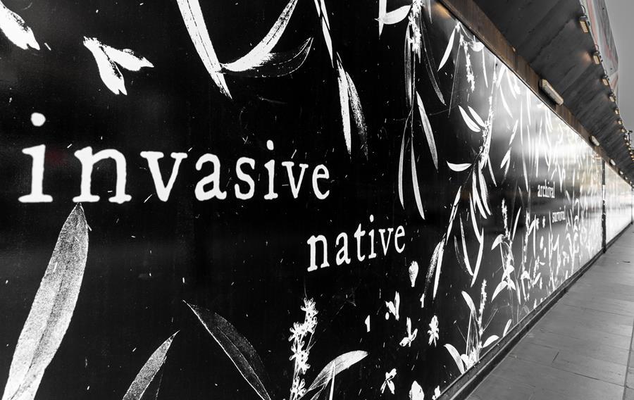 City Square 'Invasive Native' artwork