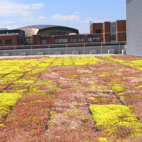 Sedum roof at 3 Assembly Square, Cardiff Bay