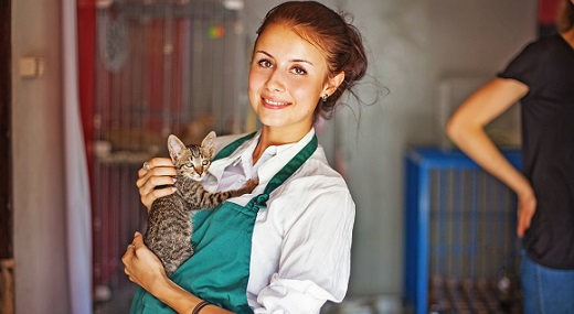 Young female worker carign for kitten in animal shelter