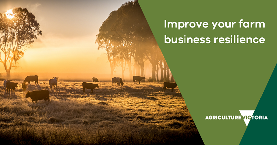 canva tile saying farm business resilience