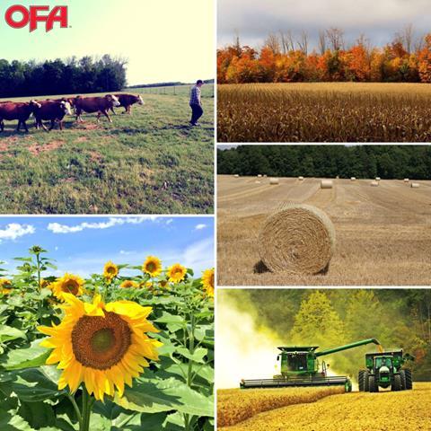Photo Contest Collage