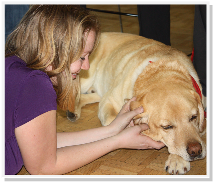 Bo the Golden Lab is waiting for your next therapy session