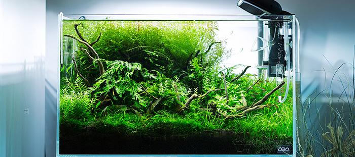 Akvárium hűtés és levegőztetés a nyári melegekre