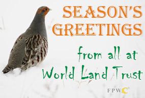 Common Partridge in Snow in the Caucasus Wildlife Refuge. Image © FPWC.