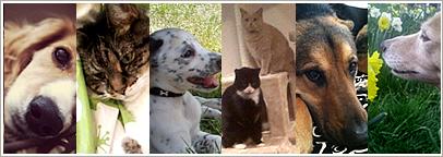 Pets of TBG!