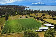 Darlington Vineyard, East Coast, Tasmania