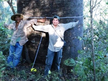 A massive Cuipo Tree. © NCEcuador.