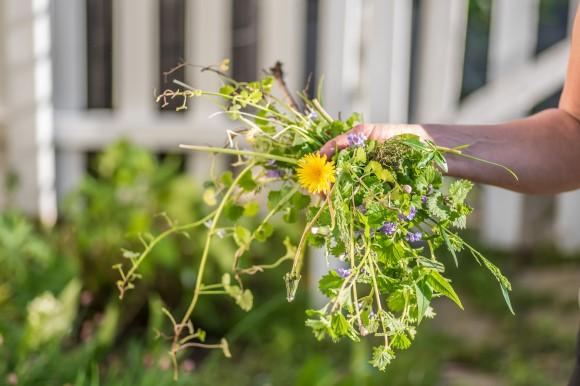 Handful of weeds