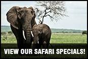 Safari Specials