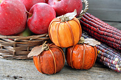 Picture of: Pumpkin Harvest