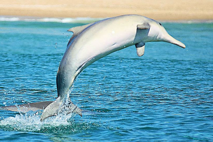 Plett's Indian Ocean humpback dolphin surveys. Photo: Danielle Conry
