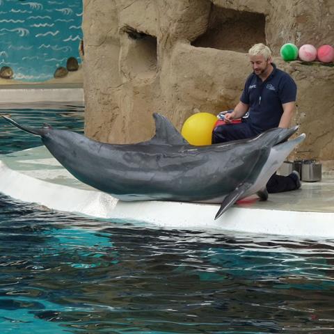 A captive dolphin