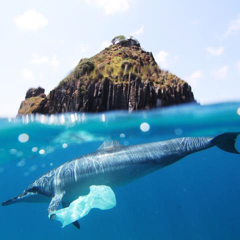 Dolphin with plastic bag on fin