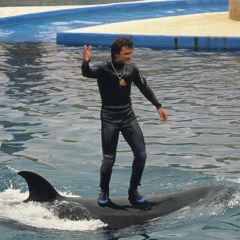https://uk.whales.org/2020/02/10/seaworld-stops-trainers-standing-on-dolphins-at-some-of-its-facilities/