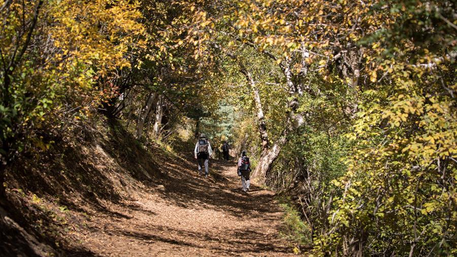 Dolpo forest trekking