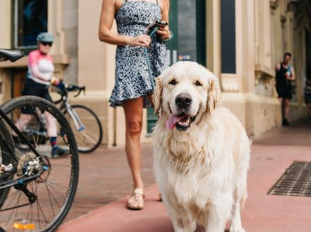 Dog-friendly cafes and spaces in the city