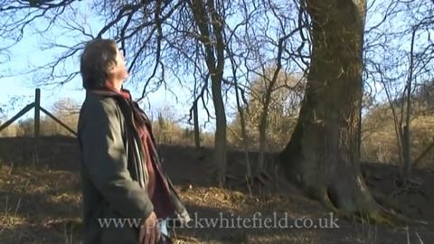 Patrick Whitefield looks at an oak