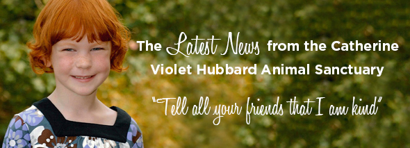 The Latest News from the Catherine Violet Hubbard Animal Sanctuary